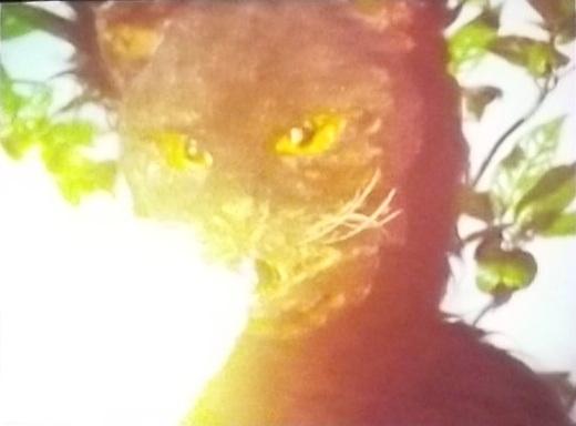 File:Cat Fire.jpg