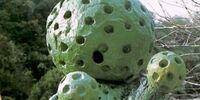 Sponge Green