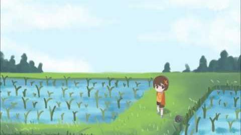 LcdDem OST - Rice field