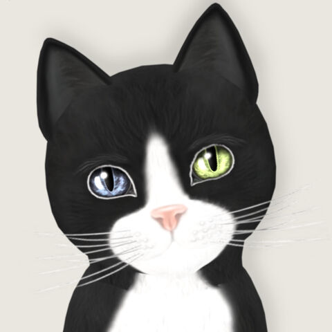 File:Hateau Black & White 3 - Ody Wonder.jpg