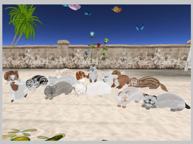 File:KittyCatS - Group Picture.jpg