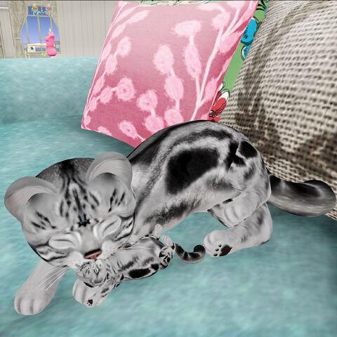 File:Kitten Loves her New Born.jpg