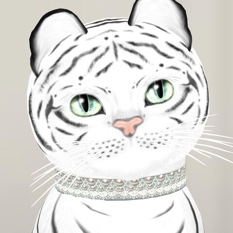 File:Le Tigre - Bengal Blanc - Matching Collars Now Available!.jpg