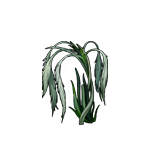File:Healing feather grass.png