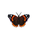 File:Butterfly admiral.png