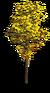 Tree-Yellow tree