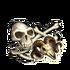Bone set