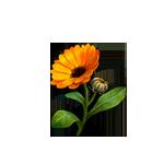 File:Healing calendula.png