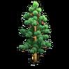 Resource-Pine 1