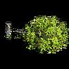 Res broken tree 1