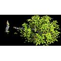 Res broken tree 1.png
