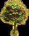 Cherry tree ph4
