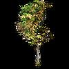 Res burnt tree 1