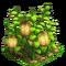 Lanterns plant ph4