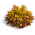 Res goosefoot yellow 1.png