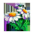Coll flowers daisy