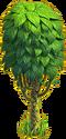 Cocoa tree ph2