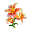 Coll flowers lily