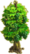 Grapes plant ph3