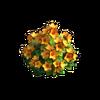Res bush orange flowers 1