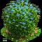 Flax plant ph3