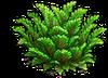 Res juniper 2