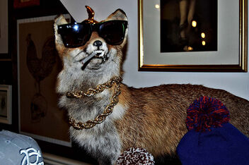 Gangsta fox