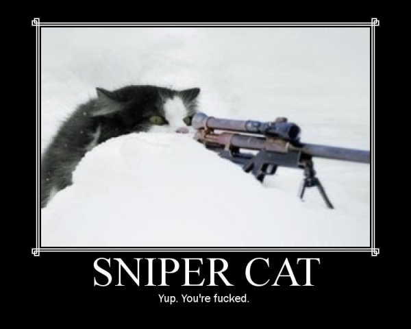 File:Sniper cat sized.jpg