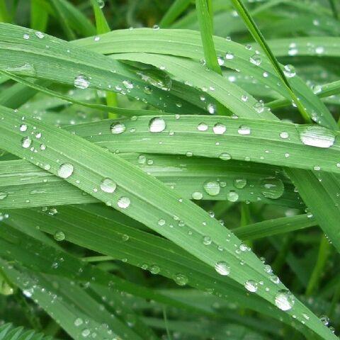 파일:Greengrass-Q.jpg
