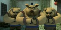 Bao (pig)