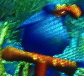 File:Atea's bird.JPG