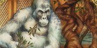 Gorilla/Meta