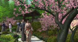 Cherry Blossom Festival 3