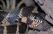 Serpiente mutante