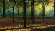 Forest-wallpapers-wallpaper-background-deciduous-walls