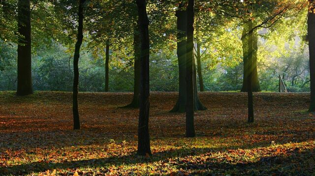 File:Forest-wallpapers-wallpaper-background-deciduous-walls.jpg