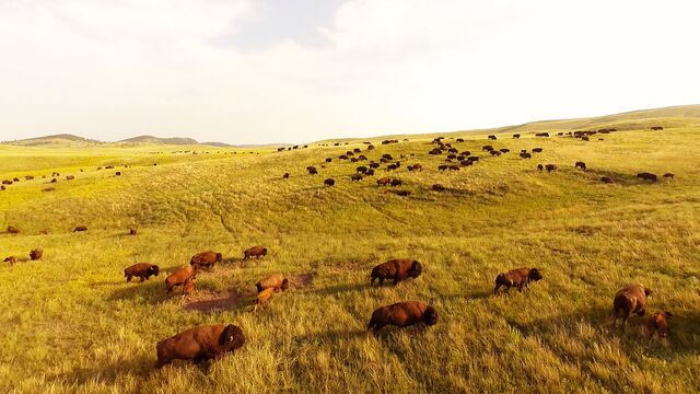 File:Prairie.jpg