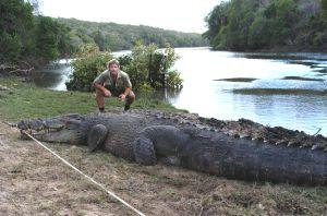 File:Crocodile.jpg