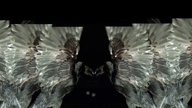 File:SHOWstudio-Raven-02.png