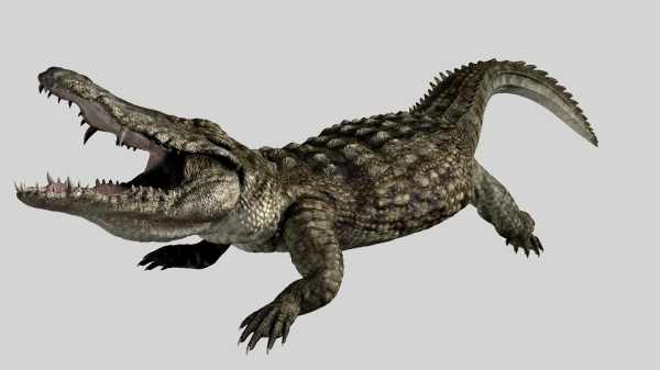 File:Crocodile 01 still.jpg