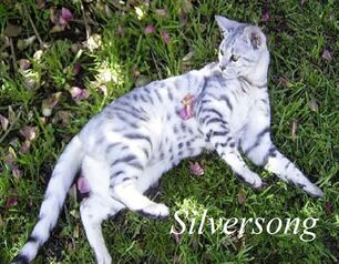 Silversong