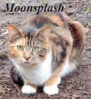 File:Moonsplash.jpeg