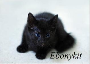 Ebonykit