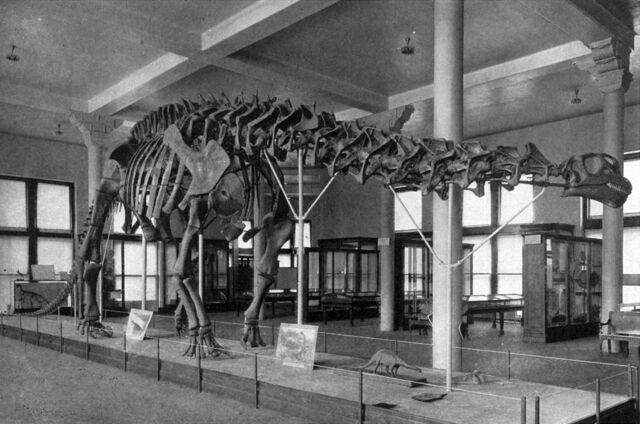 File:Sharp lull brontosaurus.jpg