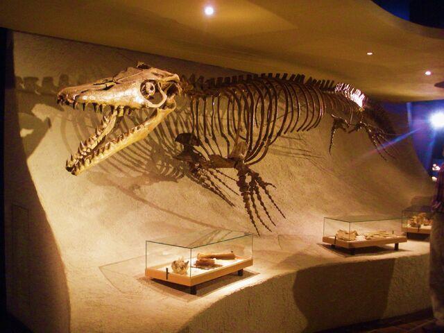 File:Mosasaurus hoffmanni - skeleton.jpg