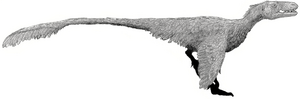 Dromaeosaurus by Tom Parker