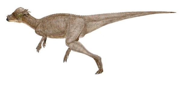 File:Pachycephalosaurus1.jpg