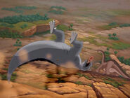 Grey Sharptooth rolls downhill