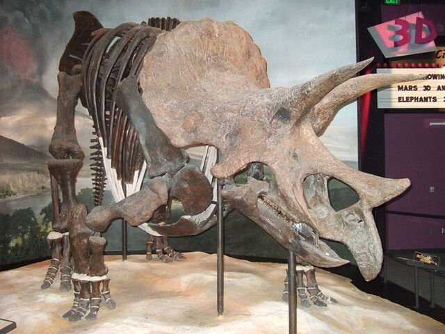 File:Triceratops prorsus.jpg
