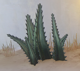 Saw-Toothed Bulbous Succulent prop placed